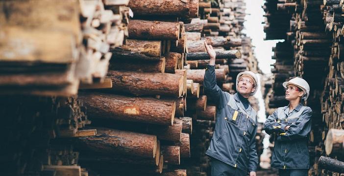 Nieuwe technologieën maken hout veelzijdiger in gebruik, waardoor houtgerelateerde bedrijven een nog interessantere belegging zijn, stelt Pictet AM.