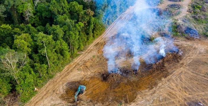 Ontbossing is een veelbesproken maatschappelijk thema, maar ook in de financiële wereld krijgt het steeds meer aandacht.